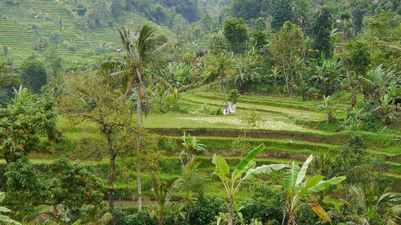 Indonesien 038