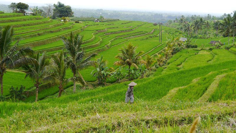Indonesien 039
