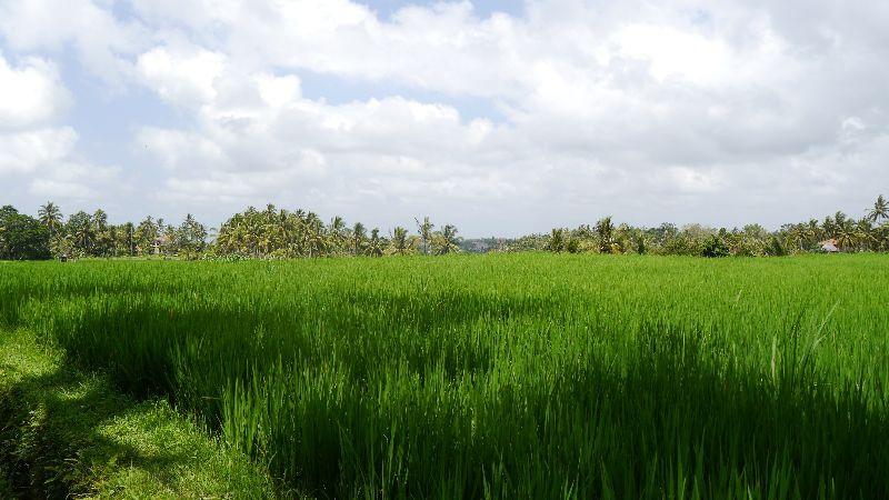 Indonesien 049