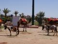Marokko_web079